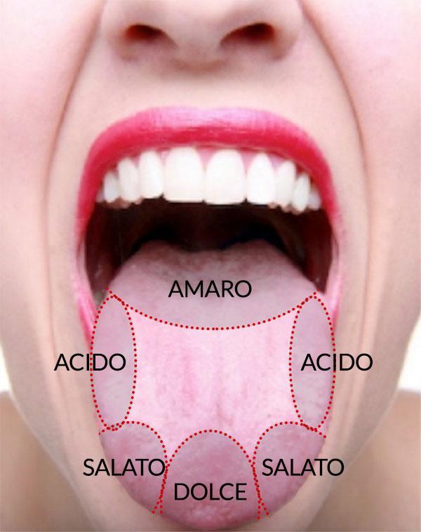 Le quattro zone principali del gusto sulla lingua